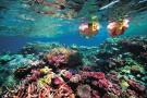 Snorkeling_GreatBarrierReef600